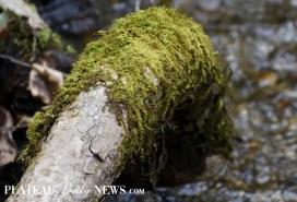 Highlands.Biological (5)
