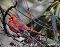 audubon (101)