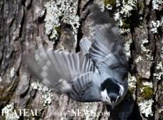 audubon (11)
