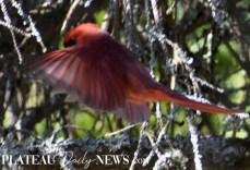 audubon (12)