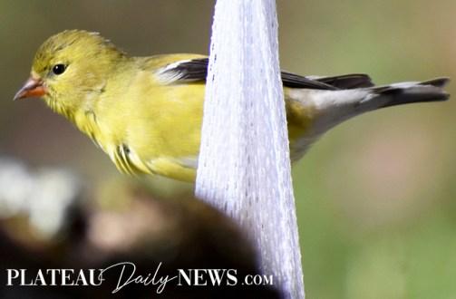 audubon (18)