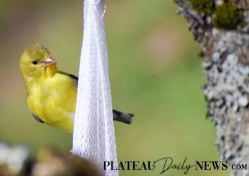 audubon (19)
