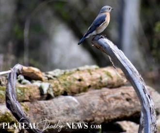 audubon (29)