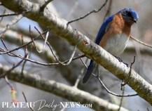 audubon (30)