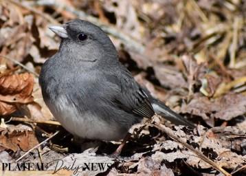 audubon (32)