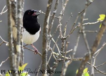 audubon (37)