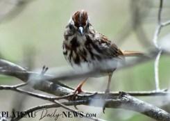 audubon (38)