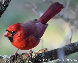 audubon (43)