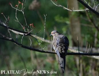 audubon (48)