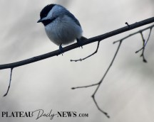 audubon (52)