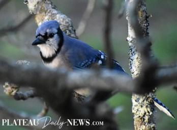 audubon (54)