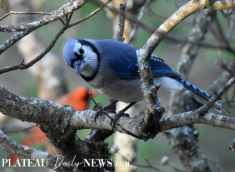 audubon (56)