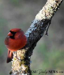 audubon (58)