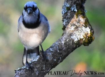 audubon (63)