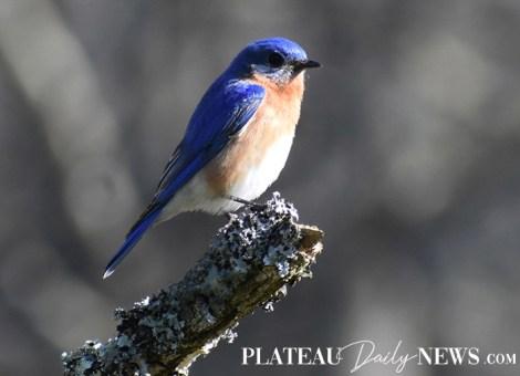 audubon (67)