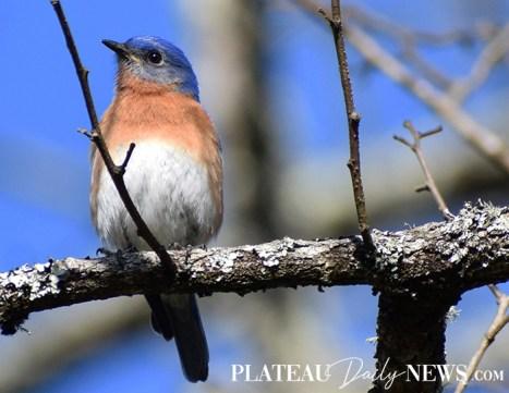 audubon (72)