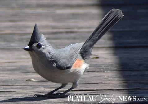 birds (27)