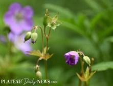 Botanical.Garden (26)