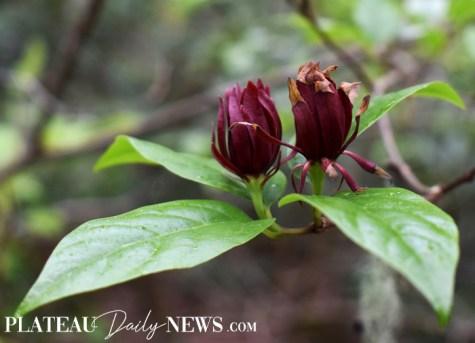 Botanical.Garden (34)