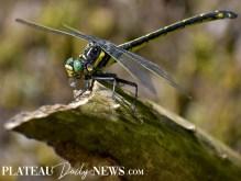 Dragonflies (18)