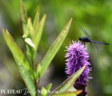 Dragonflies (20)