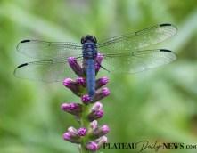 Dragonflies (25)