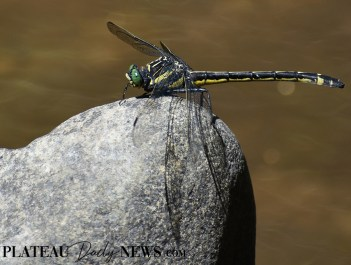 Dragonflies (28)
