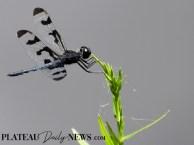 Dragonflies (39)