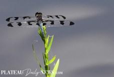 Dragonflies (40)