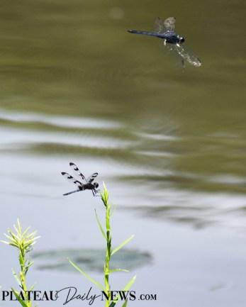 Dragonflies (44)