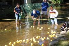 Duck (7)