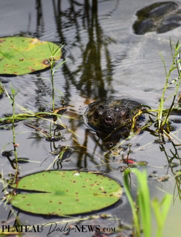 Turtles (14)