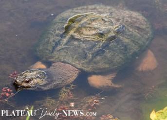 Turtles (17)