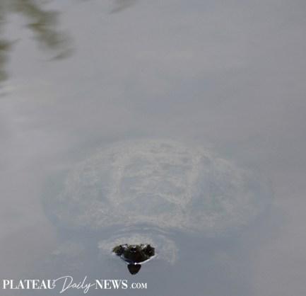 Turtles (22)