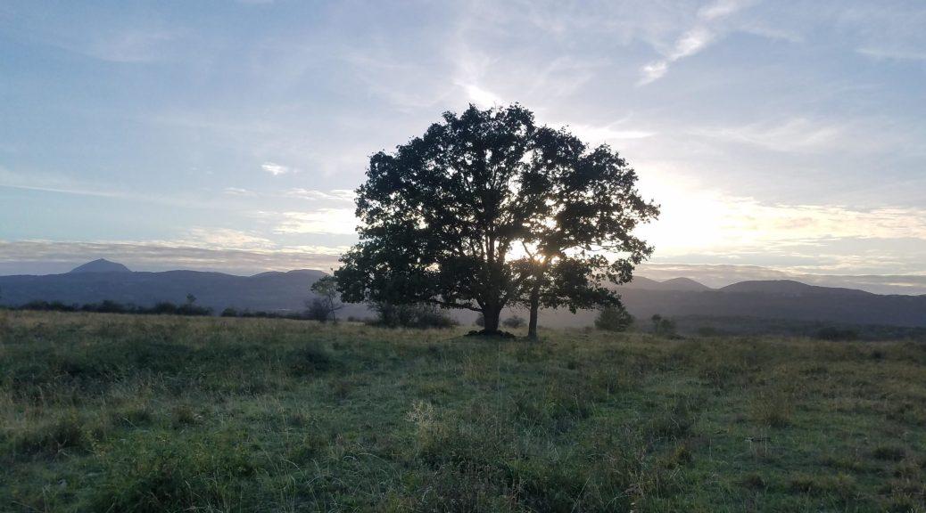 Chêne sur le plateau de Lachaud