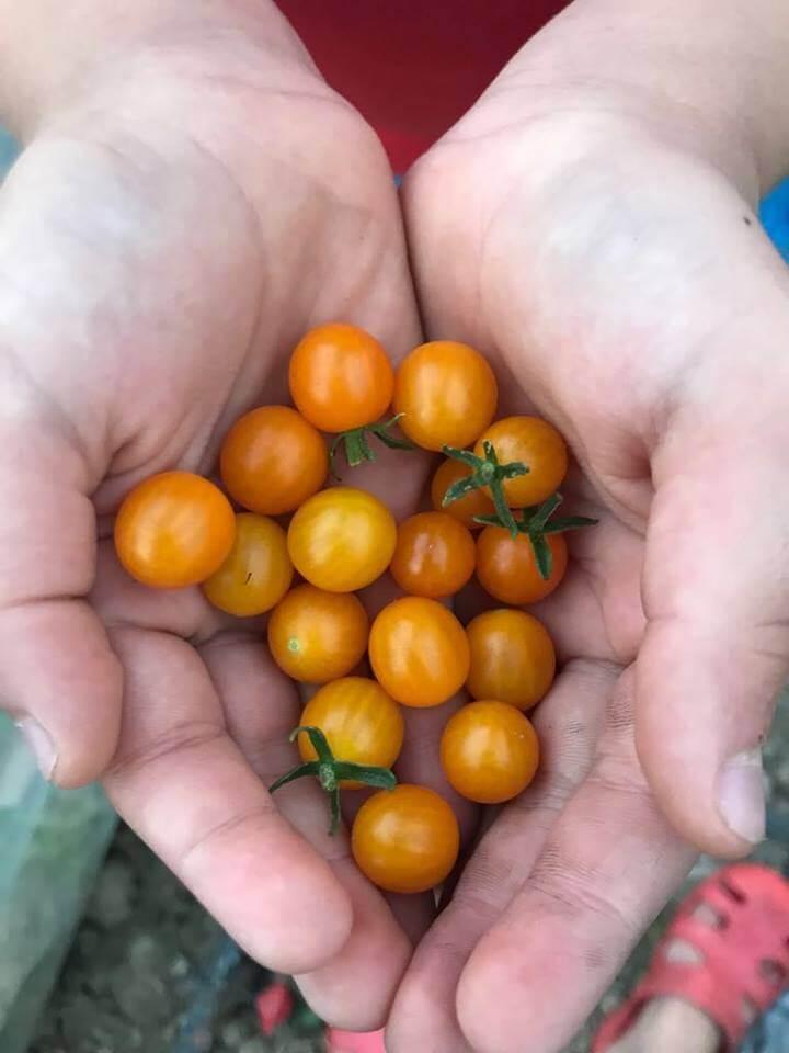Ferma Nasul Rosu, legume ferma Bucuresti (4)