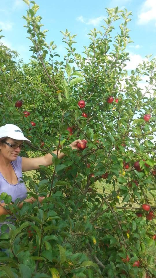 Fructe la Ferma ecologica Topa
