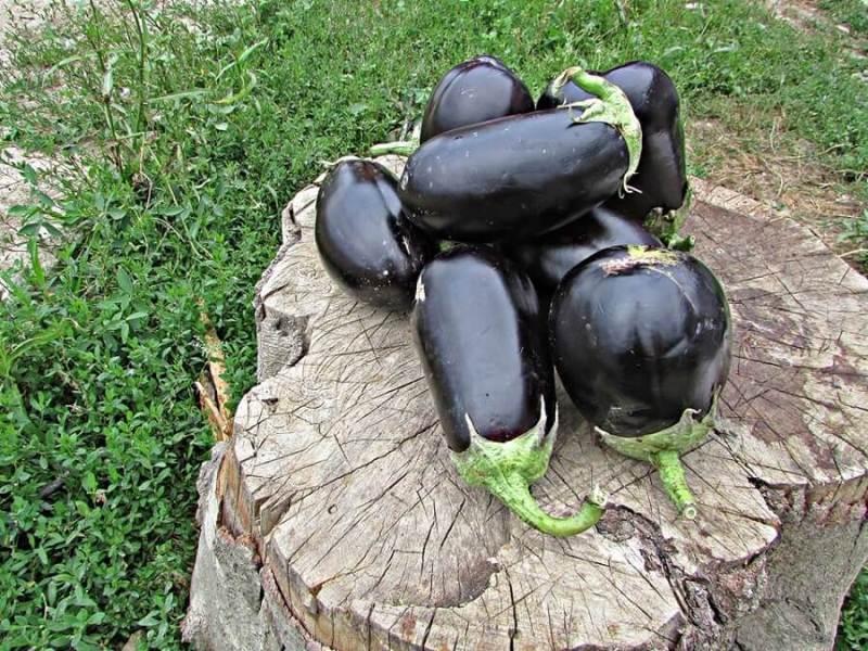 lusca-produse-cu-gust-romanesc-cos-legume-nasaud-livrare-la-domiciliu-10