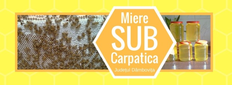 miere-subcarpatica-pe-platferma-albine-carpatina-de-la-mini-stupina-stationara-miere-subcarpatica-din-localitatea-varfuri-judetul-dambovita