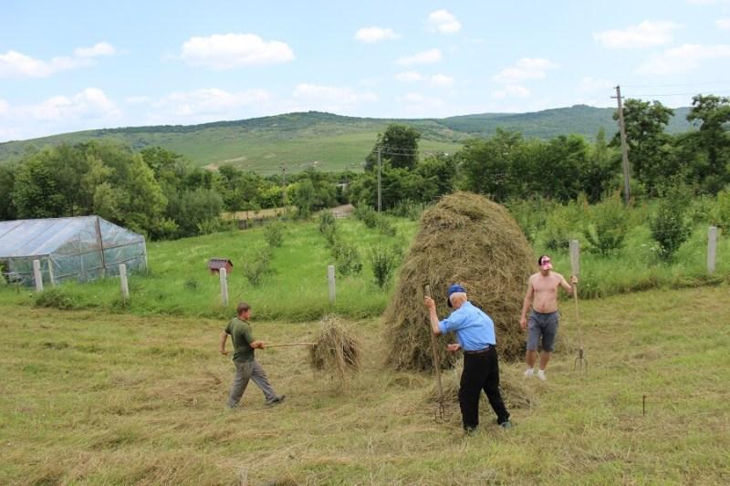poeferma-ferma-din-localitatea-bucecea-judetul-botosani-23