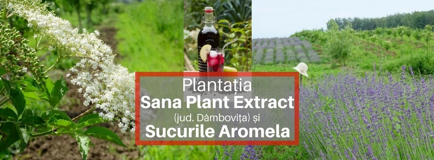De la Plantație la Sucuri Naturale – Sana Plant Extract