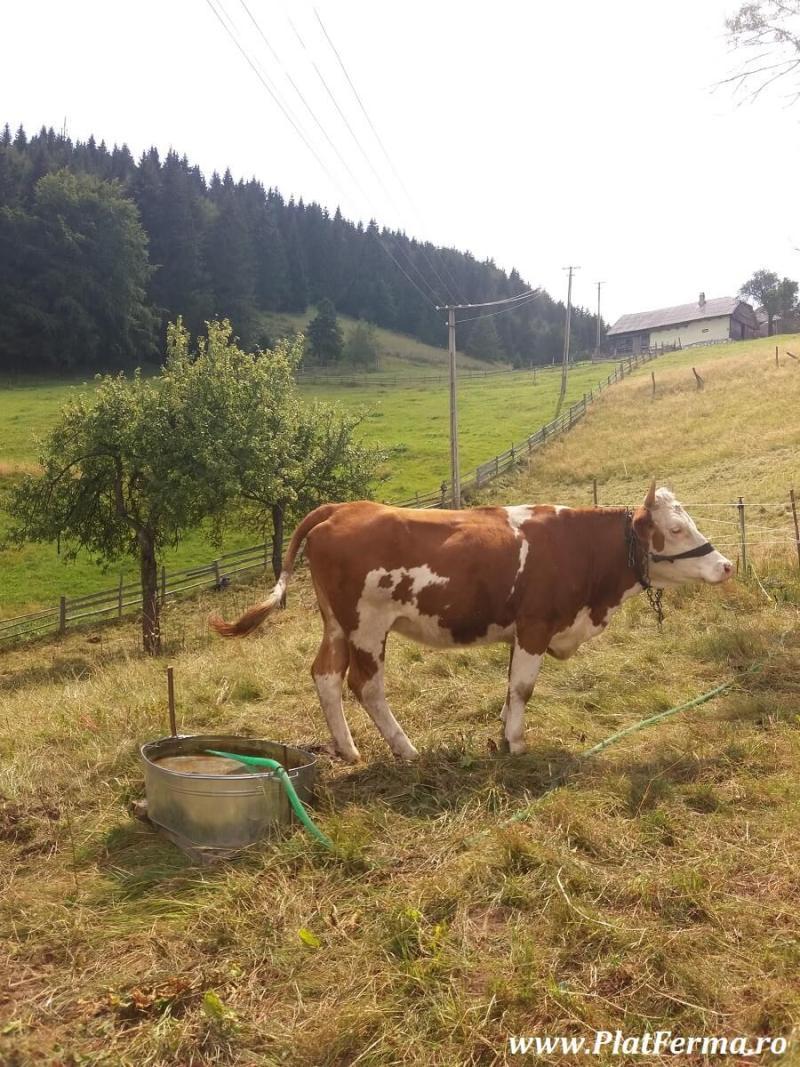 PlatFerma in vizita la Ferma Blajinilor din Fundata, judetul Brasov (17)
