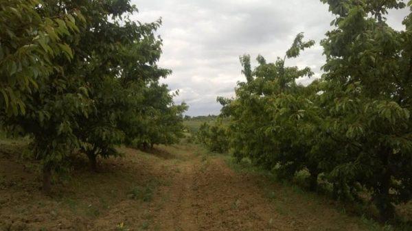 Pomăria Bădăcin, Județul Sălaj (70)