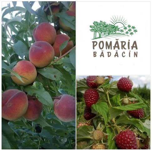 Pomăria-Bădăcin, fructe ecologice din Transilvania