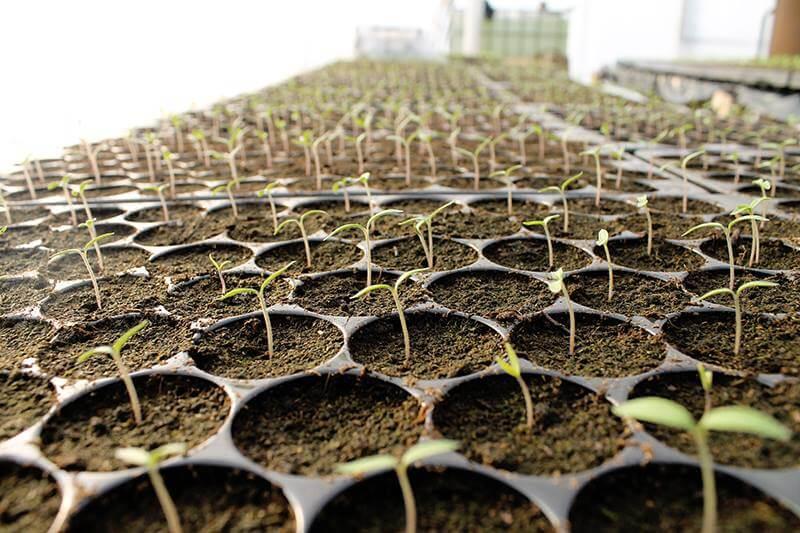 Tomatina, cooperativa agricola din judetul Ilfov gradina cu aplicatie livrare mancare, comanda mancare Bucuresti sau livrare mancare Bucuresti (4)