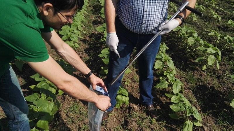 Ulei presat la rece floarea soarelui BIOLOI, ulei organic din seminte romanesti (5)