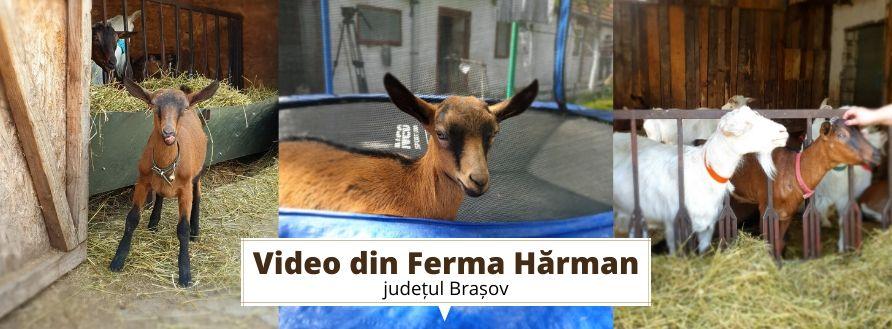 Vizită video la Ferma Hărman, Brașov