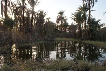 Flooded orchard in Fares, Aswan
