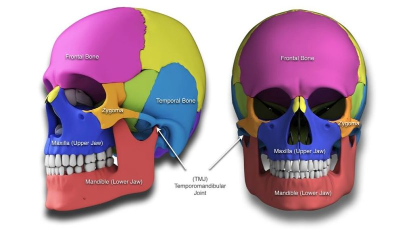 craniofacial-skull-teeth-misalignment