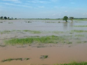 submerged rices farms in Kebbi state